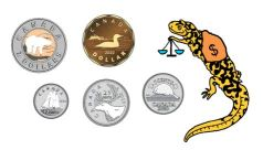 Counting Money Worksheets Measures Salamander Tyger