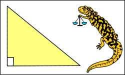perimeter of right triangle image
