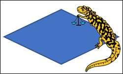 perimeter of rhombus image